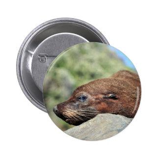 Fur seal New Zealand Pinback Buttons