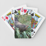 Fur seal on bed of flax bicycle playing cards