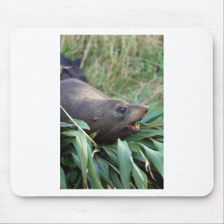 Fur seal on bed of flax mouse pad