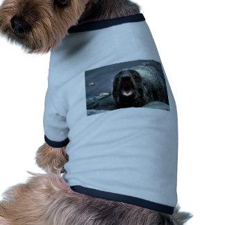 Fur Seal Portrait Pet Clothing