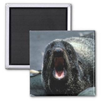 Fur Seal Portrait Refrigerator Magnet