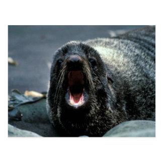 Fur Seal Portrait Postcard