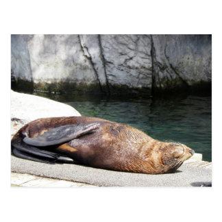 Fur Seal Postcard