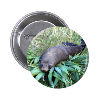 Fur seal resting on bed of flax pins