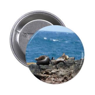 Fur Seals Phillip Island Buttons