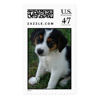 FURever Friends Humane Society beagle postage
