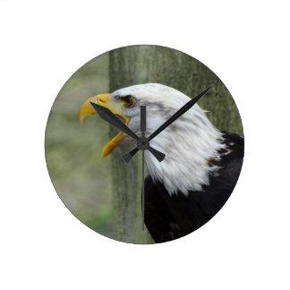 Furia Eagle calvo Reloj Redondo Mediano