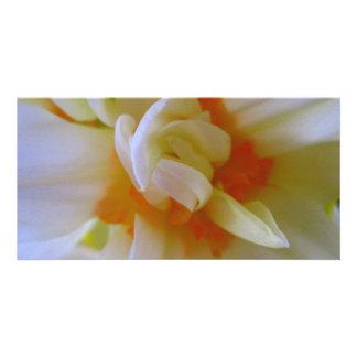 Furled Daffodil Center Photocard Card
