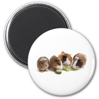 furnace guinea pigs who eat, magnet