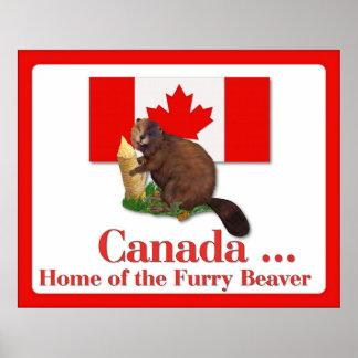 Furry Beaver Poster
