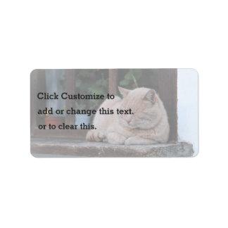 Furry blond cat sleeps label