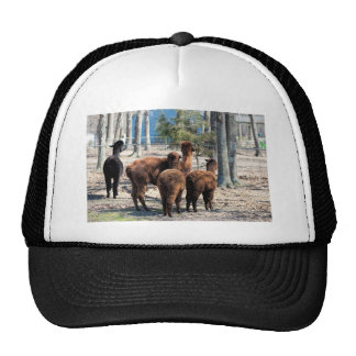 Furry Brown Alpaca Behinds Trucker Hat