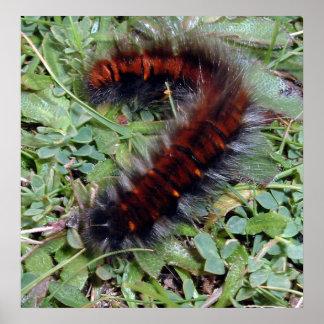 Furry Caterpillar Poster
