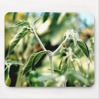 Furry Chilies Mouse Pad