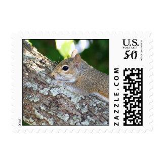 Furry Hello! stamp