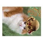 Furry orange white cat in fashion vintage hat postcard
