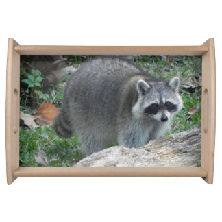 Furry Raccoon Photo Serving Trays