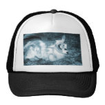 Furry small blue goat doeling baby right hats