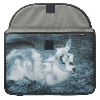 Furry small blue goat doeling baby right MacBook pro sleeve