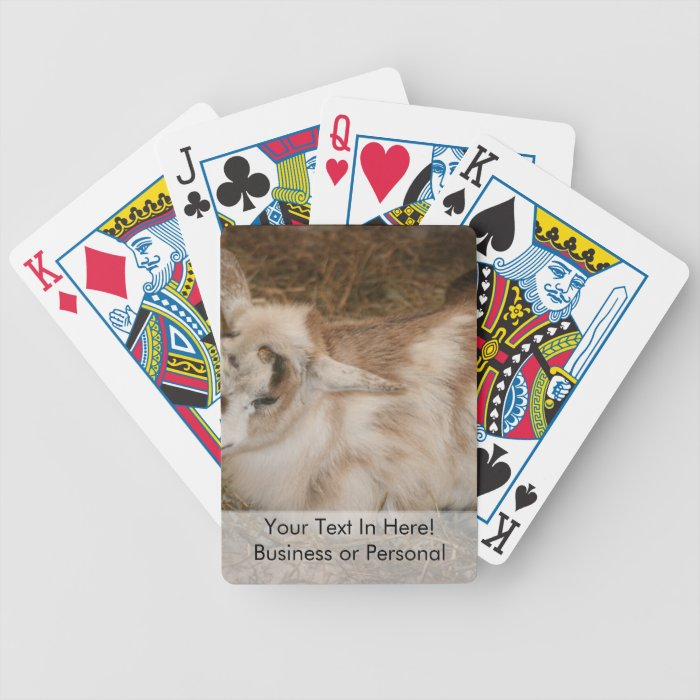 Furry small goat doeling baby bicycle playing cards