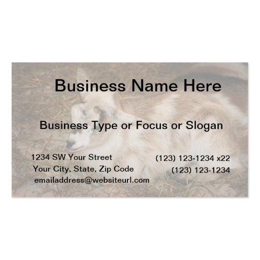 Furry small goat doeling baby Double-Sided standard business cards (Pack of 100)