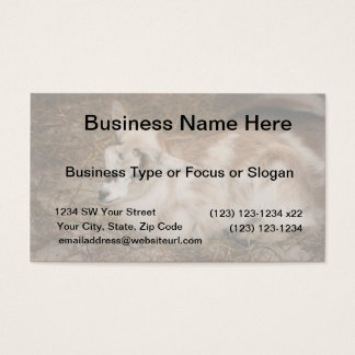 Furry small goat doeling baby business card