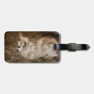 Furry small goat doeling baby tags for luggage
