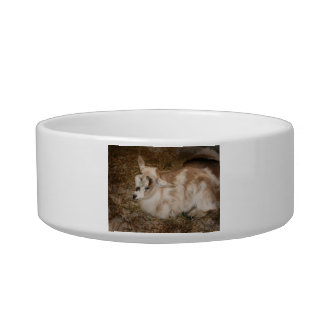 Furry small goat doeling baby pet bowl