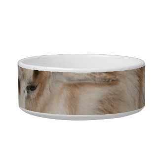 Furry small goat doeling baby pet bowls