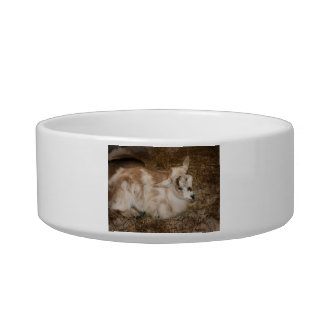 Furry small goat doeling baby right cat water bowl