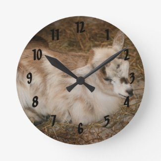 Furry small goat doeling baby right round wallclocks