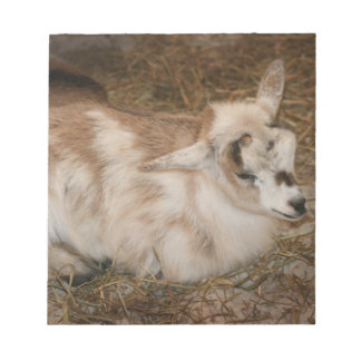 Furry small goat doeling baby right notepad