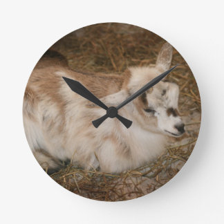 Furry small goat doeling baby right round clock