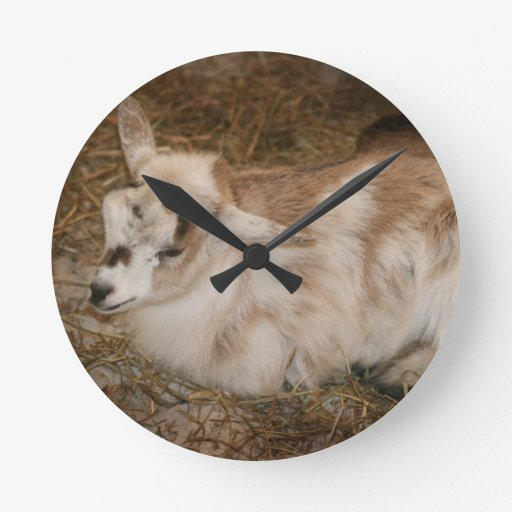 Furry small goat doeling baby round wall clock