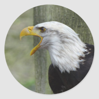 Fury Bald Eagle Classic Round Sticker