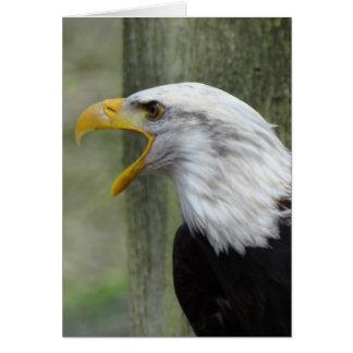Fury Bald Eagle Greeting Card