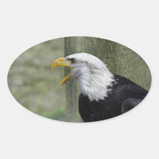 Fury Bald Eagle Oval Sticker