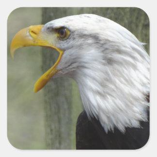 Fury Bald Eagle Square Sticker