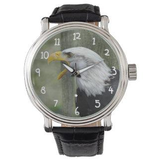 Fury Bald Eagle Watch