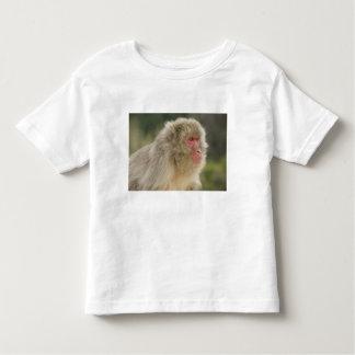Fuscata japonés del Macaca del Macaque), también Tshirts