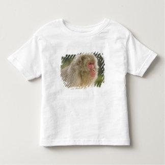 Fuscata japonés del Macaca del Macaque), también Tee Shirts