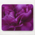Fuschia Carnation mousepad
