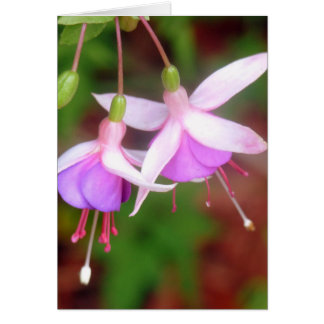 Fuschia Flowers Card