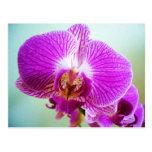 Fuschia orchid postcards