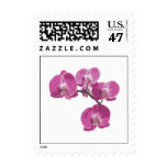 Fuschia orchid stamp