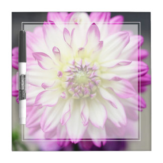 Fuschia Pink and White Dahlia Flower Dry-Erase Board