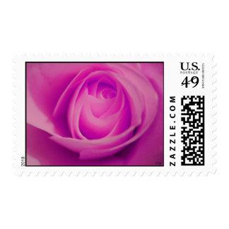 Fuschia Rose, S Cyr Postage Stamp