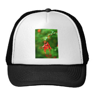 Fuschia Trucker Hat