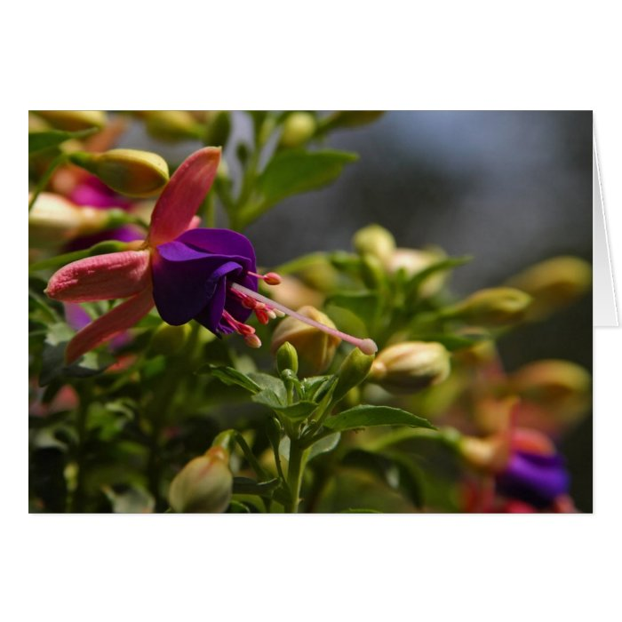 fuschias flower note card