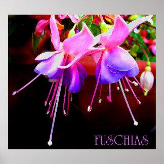 fuschias poster
